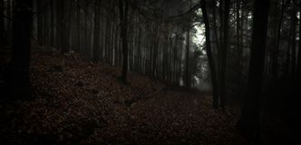 Dark creepy foggy beech forest. Gloomy magical landscape. Late autumn/fall,november evening, mist. South Moravia, Eastern Europe. Panoramic image royalty free stock photography
