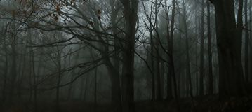 Dark creepy foggy beech forest. Man in dark clothes surrounded by gloomy magical landscape. Late autumn/fall,november evening, mist. South Moravia, Eastern royalty free stock photography