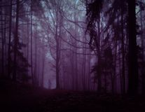 Dark creepy foggy forest. Man in dark clothes on the road surrounded by gloomy fantasy landscape. Silence and calm, dreaming,loneliness. Autumn,november stock photos