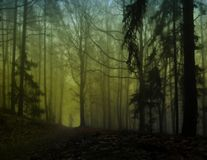 Dark creepy foggy forest. Man in dark clothes on the road surrounded by gloomy fantasy landscape. Silence and calm, dreaming,loneliness. Autumn,november royalty free stock photos