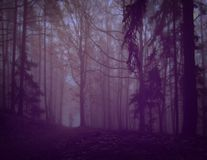 Dark creepy foggy forest. Man in dark clothes on the road surrounded by gloomy fantasy landscape. Silence and calm, dreaming,loneliness. Autumn,november stock images