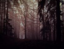 Dark creepy foggy forest. Man in dark clothes on the road surrounded by gloomy fantasy landscape. Silence and calm, dreaming,loneliness. Autumn,november royalty free stock photography