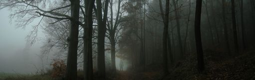 Dark creepy foggy forest. Man in dark clothes on the road surrounded by gloomy magical landscape. Autumn,november evening. Composite photo royalty free stock photo