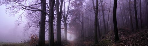 Dark creepy foggy forest. Man in dark clothes on the road surrounded by gloomy magical landscape. Late autumn/fall,november evening, South Moravia, Eastern stock image