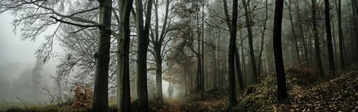 Dark creepy foggy forest. Man in dark clothes on the road surrounded by gloomy magical landscape. Late autumn/fall,november evening, South Moravia, Eastern stock images