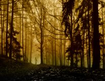 Dark creepy foggy forest. Man in dark clothes on the road surrounded by gloomy fantasy landscape. Silence and calm, dreaming,loneliness. Autumn,november royalty free stock image