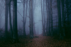Dark and creepy foggy forest trail. Gloomy dark autumn day. Filtered image Royalty Free Stock Photography