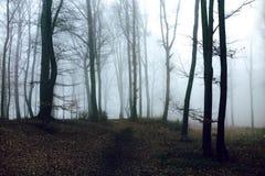 Dark and creepy foggy forest trail. Dark scary forest like a fairy tale Stock Photos
