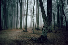 Dark and creepy foggy forest trail. Dark scary forest like a fairy tale Royalty Free Stock Photo