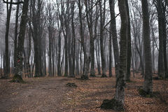Dark and creepy foggy forest trail. Dark scary forest like a fairy tale Royalty Free Stock Photos