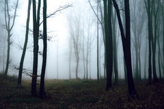 Dark and creepy foggy forest trail. Dark scary forest like a fairy tale Royalty Free Stock Image