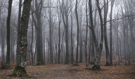 Dark and creepy foggy forest trail. Dark scary forest like a fairy tale Royalty Free Stock Images