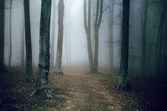 Dark and creepy foggy forest trail. Dark scary forest like a fairy tale Stock Image