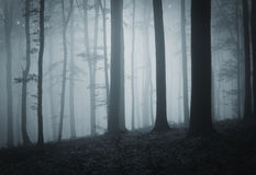 Dark creepy forest with fog at night Royalty Free Stock Images