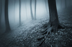 Dark creepy forest with fog and trees with big roots Stock Photo
