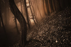 Dark creepy forest with red fog on halloween. Night stock photo
