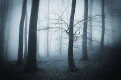 Dark creepy scary forest with fog on a late autumn evening Royalty Free Stock Photo