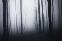 Dark creepy spooky forest on Halloween with fog Royalty Free Stock Photos
