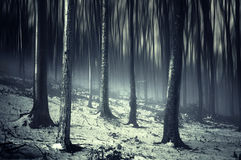 Dark creepy surreal forest with fog and snow. Dark creepy spooky surreal forest with fog and snow royalty free stock image