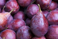 Dark Crimson Anjou pears Royalty Free Stock Images