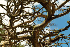 Dark curved thick tree branches Royalty Free Stock Photography