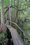 Dark Cypress Boardwalk Stock Photos