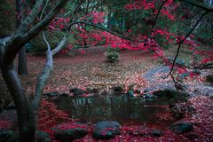 Red Autumn Leaves by the Pond royalty free stock photography