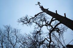 Dark dead tree silhouette above the sky Stock Image
