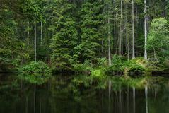 Dark deep nature forest lake Stock Photos