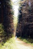 Dark dirt path through the autumn forest stock photography