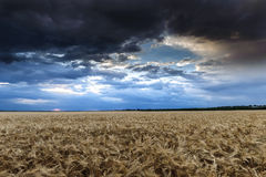 Dark dramatic field and sky landscape Stock Photos