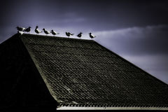 Dark and dreamlike image of birds on a rooftop. A contrasty image of seagulls on a tiled roof against a dark sky. An overall ghostly image with a stark, gothic royalty free stock image