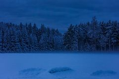 Dark, early winter morning at the edge of the forest. The ground and trees are covered with a thick layer of snow, and there is fog in the distance royalty free stock photography