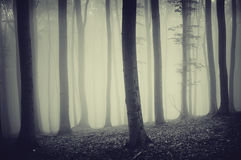Dark eerie forest with strange spooky glow and fog Royalty Free Stock Photography