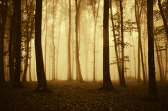 Dark enchanted forest with fog in autumn Royalty Free Stock Photo