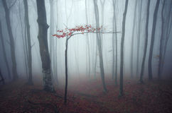 Dark enchanted forest with mist Royalty Free Stock Photos