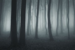Dark ethereal forest with fog at night Stock Photo
