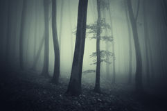Dark ethereal forest with fog Royalty Free Stock Image