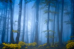 Dark fantasy forest with fog. Dark fantasy forest with blue fog royalty free stock images