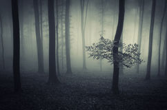 Dark fantasy forest with fog Royalty Free Stock Photography