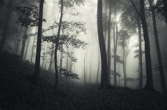 Dark fantasy forest with mysterious fog on Halloween. Dark fantasy forest with mysterious fog trough trees on Halloween royalty free stock photos