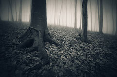 Dark fantasy fortest with fog Stock Photos