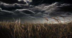 Dark Field and Sky Royalty Free Stock Photo