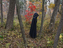 Dark figure in the forest 2 Royalty Free Stock Images