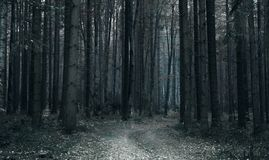 Free Dark Fir Forest With Creepy Trail Stock Photography - 112001882