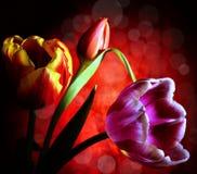 Dark flower design Royalty Free Stock Image