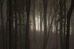 Dark fog trough trees in forest Stock Photo