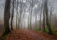 Dark foggy autumn forest Royalty Free Stock Image