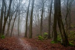 Dark foggy autumn forest. With path Royalty Free Stock Photography