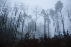 Dark foggy forest Royalty Free Stock Photos